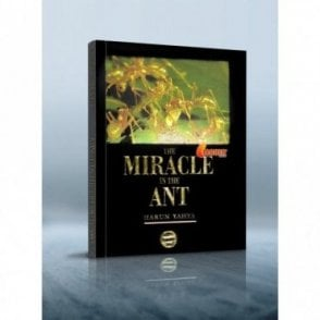 The Miracle in the Ant- Colour Print [MLB 81146]